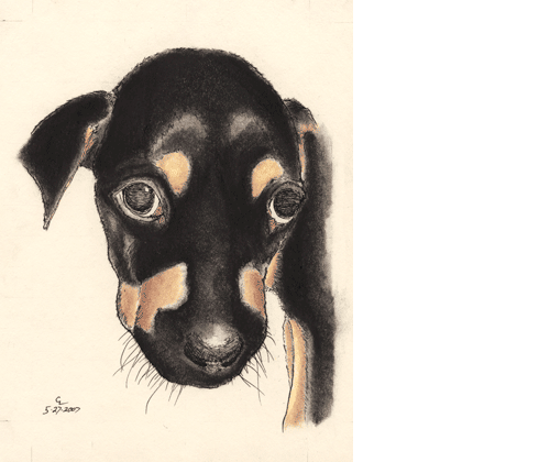 Pen and ink of small puppy